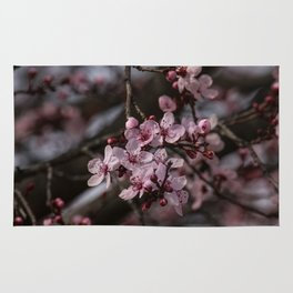 Spring Cherry Tree Blossoms - II Rug
