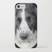 border collie iPhone & iPod Cases featuring Border Collie by Doug McRae
