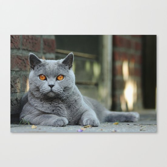 Diesel the cat ! Canvas Print