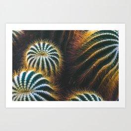 Botanical Gardens Cactus #667 Art Print