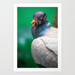The George Clooney of King Vultures Art Print