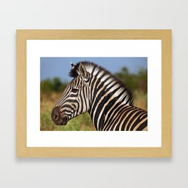 Zebra - Africa wildlife Framed Art Print
