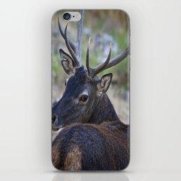 Cervo Sardo iPhone Skin