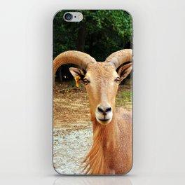 Barbary Sheep iPhone Skin