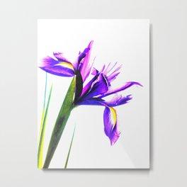 Iris Illustration Metal Print