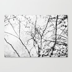 looking up . v Canvas Print