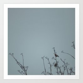 Bullfinches on a cold day Art Print