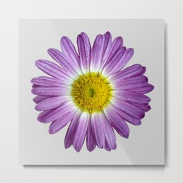 Beautiful Purple Flower On Gray Metal Print