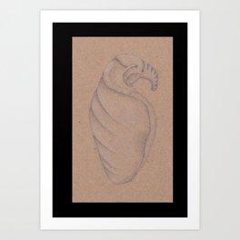 Specimen #8a (shells) Art Print