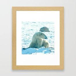 Polar Bear 1 Framed Art Print