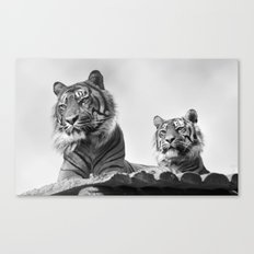 Tigers two Canvas Print
