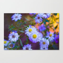 Purple Flowers III Canvas Print