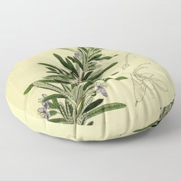 Botanical Rosemary Floor Pillow