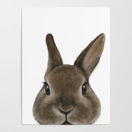 Netherland Dwarf rabbit illustration original painting print Poster