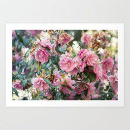 Japanese Rose Art Print