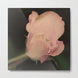 105 - one pink rose Metal Print