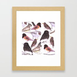Wild birds watercolor- titmouse, bushtit, starling, phoebe, juncos Framed Art Print