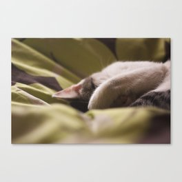 snooze Canvas Print