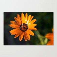 Vibrant Orange Flower Canvas Print