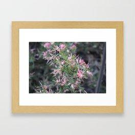 Rosemary Grevillea Framed Art Print