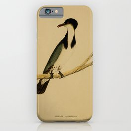 Vintage Print - The Austral Avian Record (1912) - Cuculus palliolatus iPhone Case