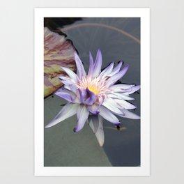 lotus_purple Art Print
