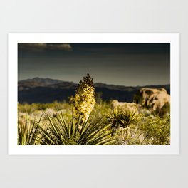 Super Bloom 7452 Paradise Joshua Tree Art Print