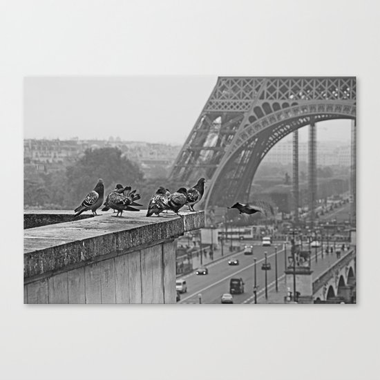 pigeons parisien Canvas Print