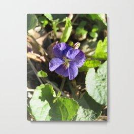 Victorious Violet Metal Print
