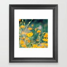 Orange Cosmos Framed Art Print