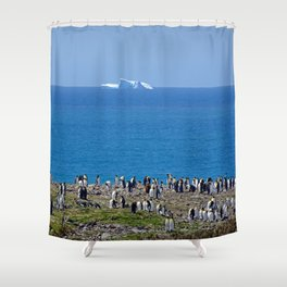 King Penguins in front of an iceberg Shower Curtain