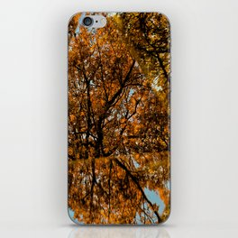 Reflected Tree iPhone Skin