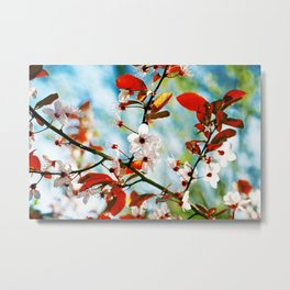 Spring Blossom II Metal Print