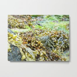 Seaweed Series 3 Metal Print