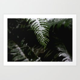 PNW Forest Fern - Minimal Nature Photography Art Print