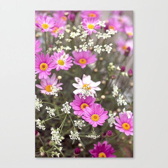 Pink Daisy Wildflower Summer Meadow Canvas Print