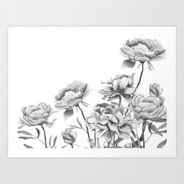 black and white peonies 2 Art Print