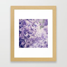 Purple Hyacinth Framed Art Print