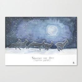 Siberian roe deer in the moonlight Canvas Print