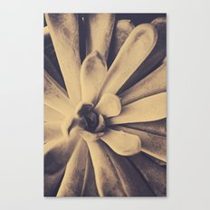 Succulent Leaves Canvas Print