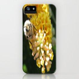 Hello Mr Bumblebee! iPhone Case
