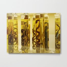 Snakes in formalin Metal Print