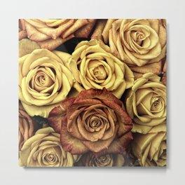 Blooming Roses, Flowers, Petals - Yellow Red Metal Print