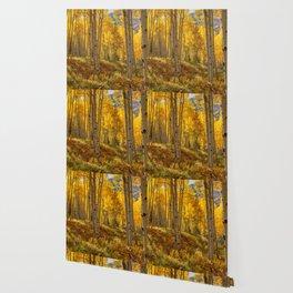 Autumn Aspen Forest Aspen Colorado Wallpaper