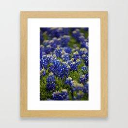 Bluebonnets Forever Framed Art Print