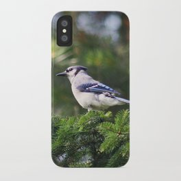 Adult Bluejay Bird Color Photo iPhone Case