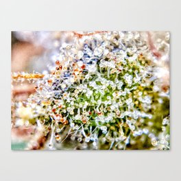 Diamond OG Kush Strain Top Shelf Indoor Hydro Trichomes Close Up View Canvas Print