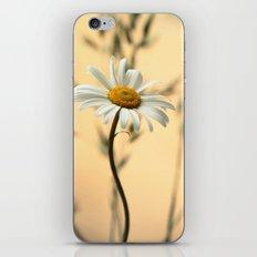 Trio Daisies iPhone & iPod Skin