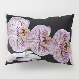 Phalaenopsis Orchid Pillow Sham