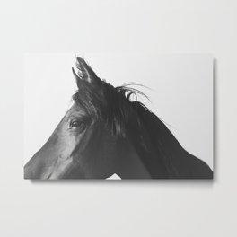 Black Horse Profile Metal Print